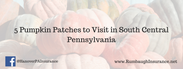 pumpkin-patches-pennsylvania