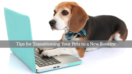 tips for transitioning your pets to a new routine